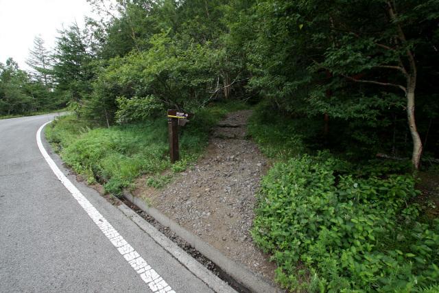 車道を少し歩き、再び登山道に入る