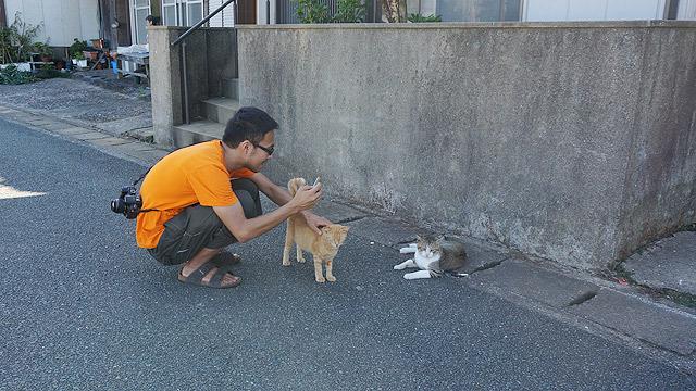 猫を触りながら違う猫の写真を撮る