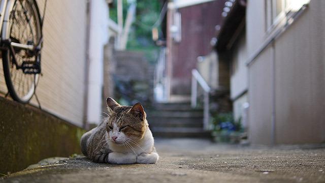 バンバン猫写真を送り、