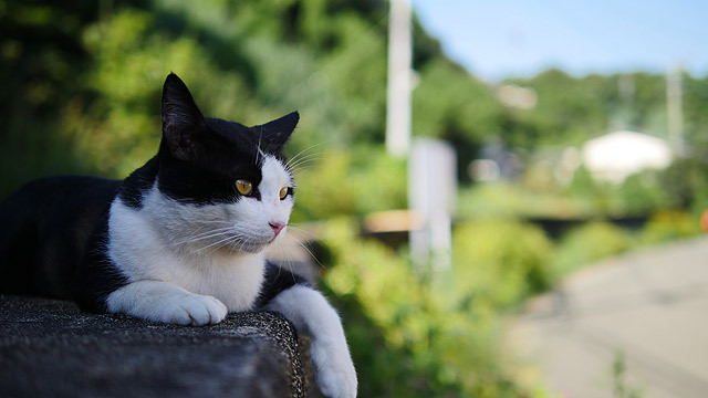 そんな景色を毎日見ている猫!