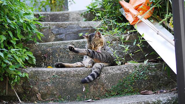 猫が羨ましそうにかまぼこを見ていた!