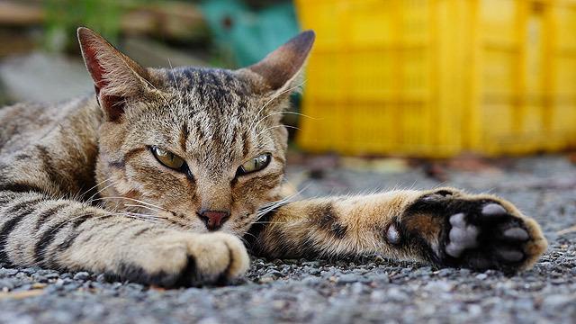 一旦、猫の写真入ります!