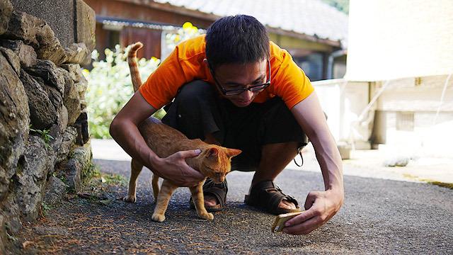 これは日本の猫です!