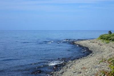 狙いをシロザケから「カラフトマス」に変更し、知床の海岸へ。