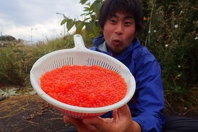 【画像】とれたてのイクラで作ったイクラ丼を死ぬ程たらふく食いに行く旅in北海道。羨ましい