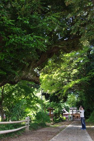 いいねー、巨樹、そのアングルいいねー!