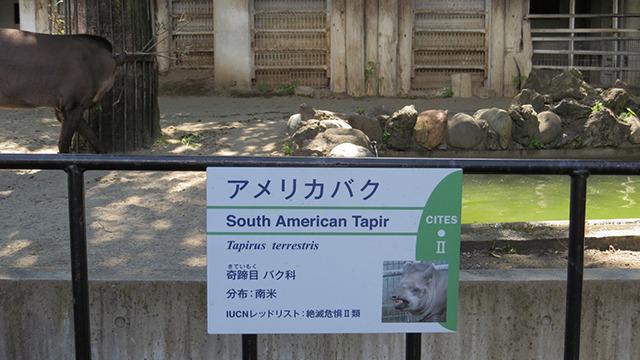 バク科という独立した科を持っている。レッドリストに入る絶滅危惧種。