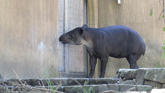 そして飼育員さんが行ってしまうと悲しい顔してずっとフェンスのところで待っているのだ。これは切ない。