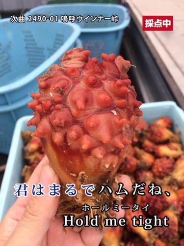ホヤもハムだね 玉置豊/標本製麺(趣味の製麺)@hyouhonさんより</a>