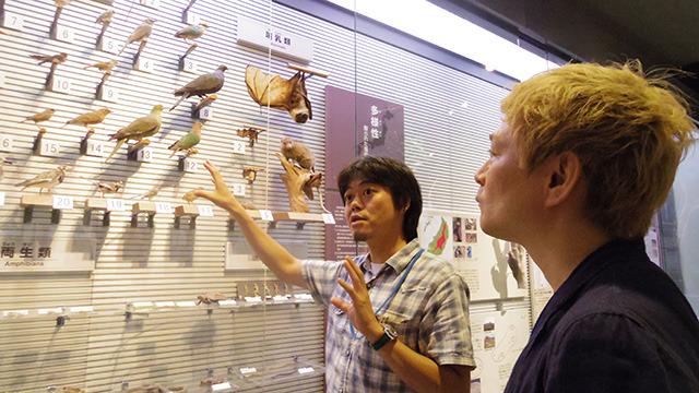 沖縄に生息するハトについて説明してくれた藤田先生