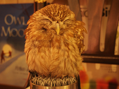 Warm welcome # 1: A sleepy-looking owl that fits in your palm.