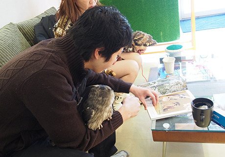 A person with an owl on their arm looking at photos of an owl.