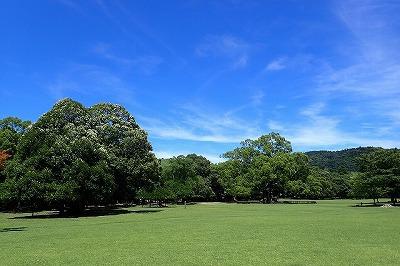 8月の奈良公園。暑すぎる。熱中症になりそう。
