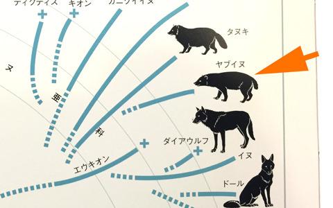 タヌキとイヌの間ぐらいっぽいです。(『新版 絶滅哺乳類図鑑』より)