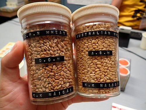 米のように小麦にも多数の品種があり、その国の気候や食文化によって栽培される品種が変わってくる。