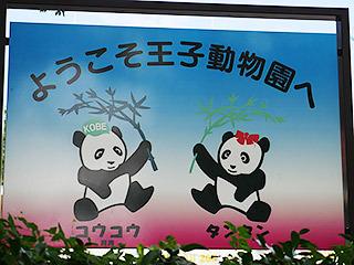 ちなみに神戸市立王子動物園は日本で唯一、パンダとコアラの両方を見ることができる