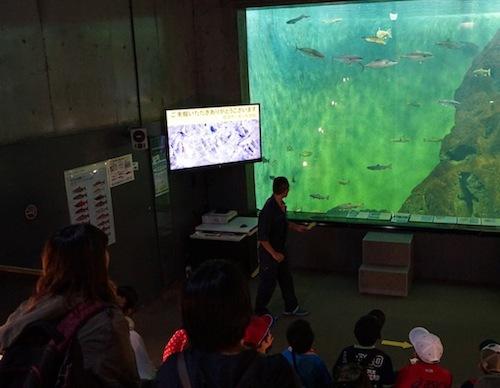 大水槽でゆたゆた泳ぐサケやカレイを前にして講義がはじまる。