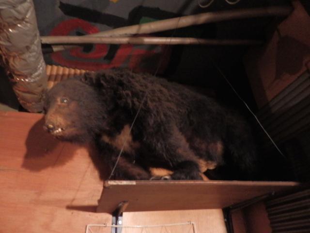 初代のクマはお腹の部分が裂けて新聞紙がはみ出ていた
