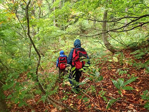 かろうじて道と言えそうな山道を歩きながら、ミズナラの木を巡っていく。丹羽さんのマイタケ狩りは独学なので、すべて自分で見つけたポイントだそうです。
