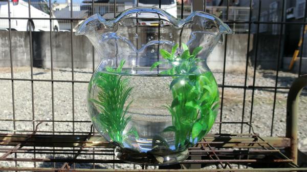 今、水草は造花のように形で売っているのに驚いた。そうか、酸素とかは機械でやるのか。