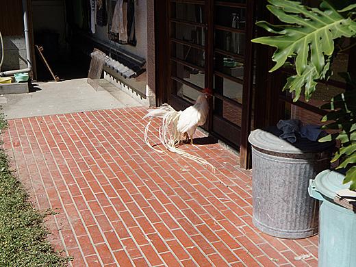 なんだか外にちらちら動いてるな、と思ったらまさに今、日光浴中のトリだった。