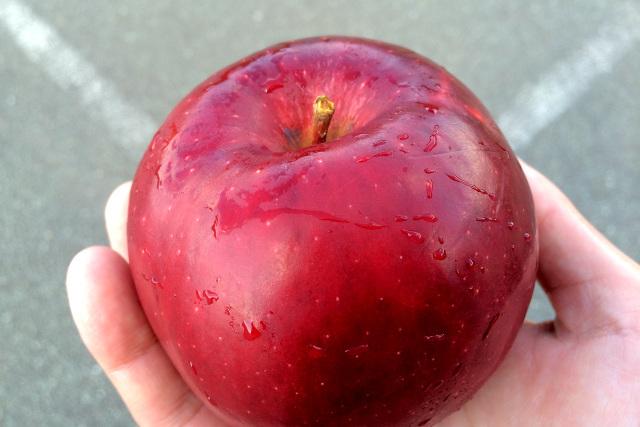 博物館の職員の方から、リンゴを頂いた