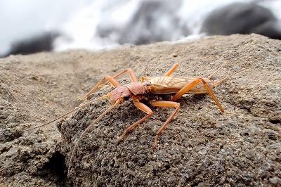 大半の時間は磯にいる昆虫を撮影したりして楽しんでいた。