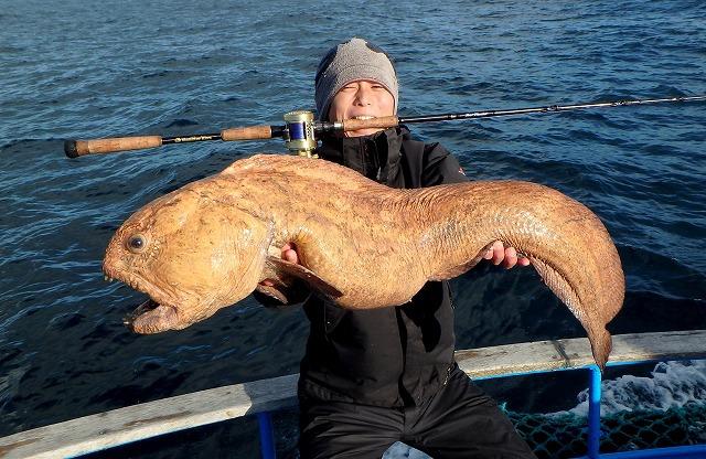 タモ網に収まり、船上へ引き上げられたのは紛れもなくあのオオカミウオ! ついに図鑑や水族館のガラス越しでしか見たことの無かったあの魚が眼前に!