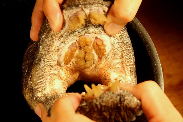 上顎の天井には臼歯状の歯が敷き詰められている。