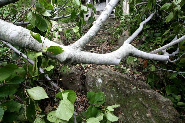 その手前で倒木が道を塞いでいた。地面を這い蹲ってなんとか潜り抜ける