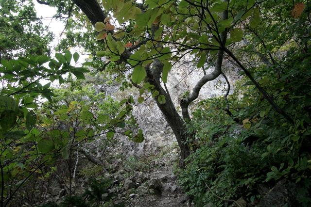 出発から約50分、ようやく視界が開けて白い岩肌が見えた