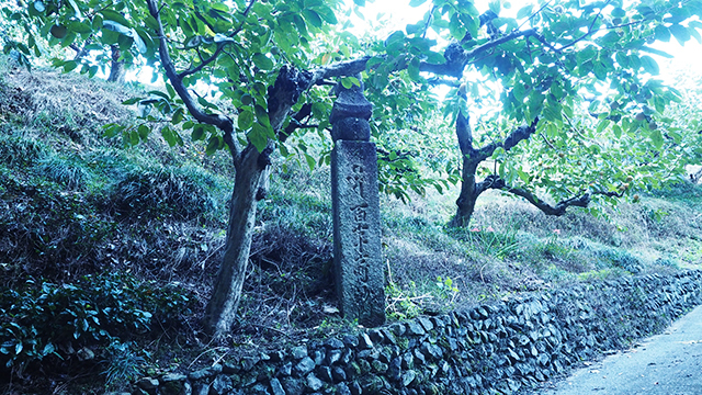 109mおきに道しるべが置かれている。空海をはじめ、かつて高野山の参拝客が多く通った高野山町石道。