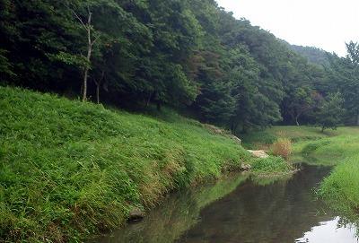こんな感じの森の中で狙ったキノコを探し出すという。きっと困難を極めることだろう。