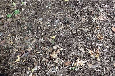 地面にオレンジ色のモノがパラパラと落ちている。