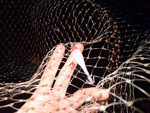 海面に浮かんだスッテを網で保護してもらいました。恥ずかしい。