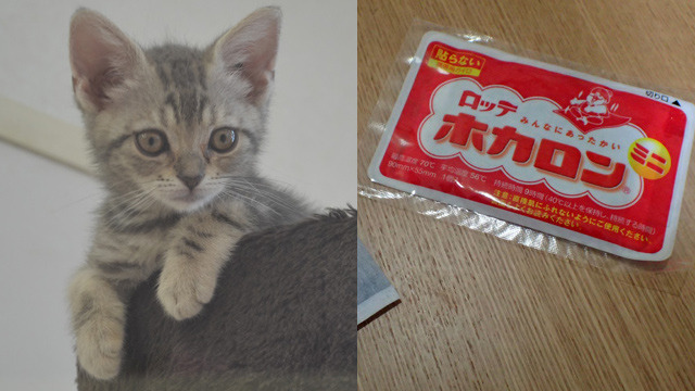 飼い猫と使い捨てカイロってよく出来てるとおもいませんか?