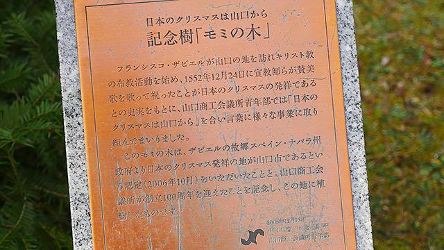 日本のクリスマスが山口と認められたことを記念する記念樹です!