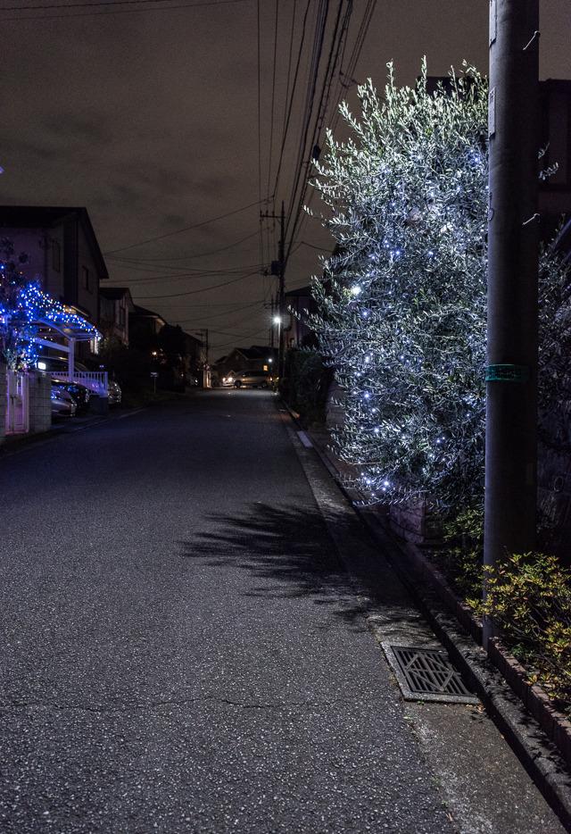 オリーブに電飾という今どきスタイル。じょうず。電柱の街灯に照らされてさらにいい感じに。