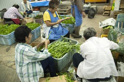 前日に収穫したウンチェー(空芯菜)の仕分けをする農家の方