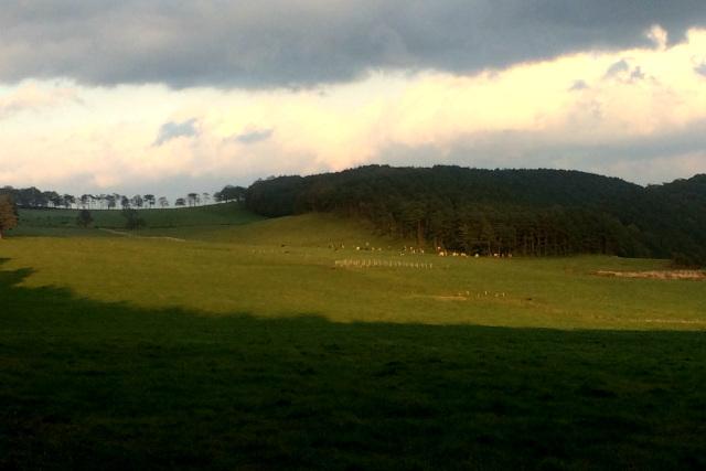 振り返ってみれば、広々とした牧場が一望のもとである