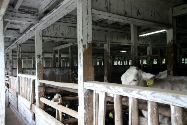 成牛の牛舎よりも部屋が細かく分かれており、柱が林立していてカッコ良い