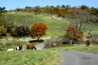小岩井農場の楽しさを知ったから……というワケではないが、翌日は遠野の荒川高原牧場を訪れた