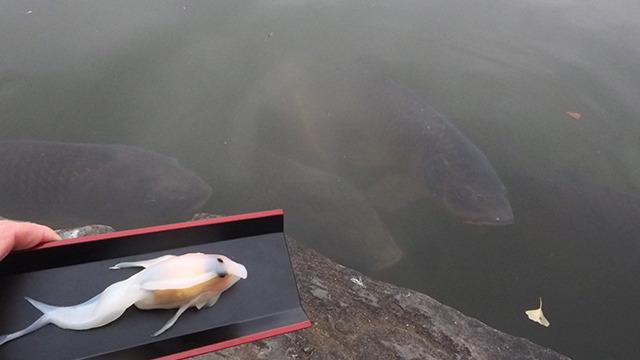 普通の鯉ってこんなだったか。大きくてちょっと怖い。