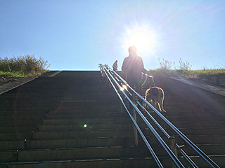 後光さす藤原と犬