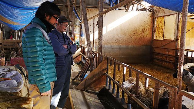 肥育は信州新町唯一の大規模農家の峯村さんが行っている