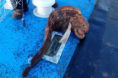 IT'S A WOLFFISH!!!!!!!!!!!!!!!