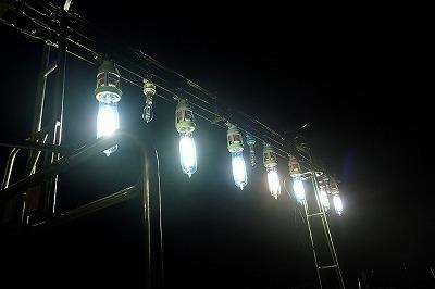 イカ寄せ用の集魚灯に集まってくるようだ。