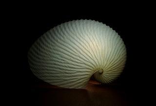 貝殻に豆電球を仕込むと、それだけでちょっとオシャレな照明になる。