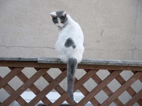 次ページの前にクリーニング中ずっとうろついていたのら猫をお楽しみください。