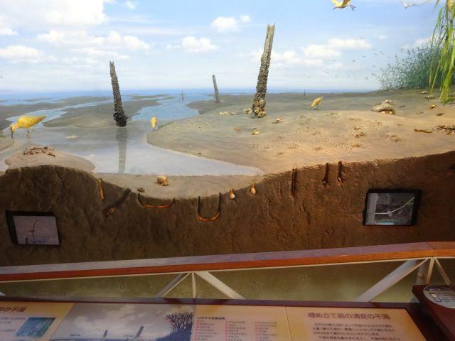 以前大山さんが調べた浦安の防波堤の先は こんなんだったのだろうなあと